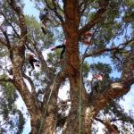 activite-famille-Grimpez-dans-les-arbres-Domaine-du-Rayol