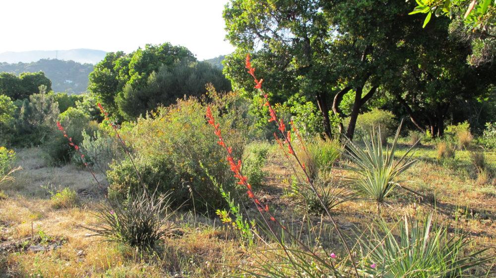 Le conseil des jardiniers : le repos estival