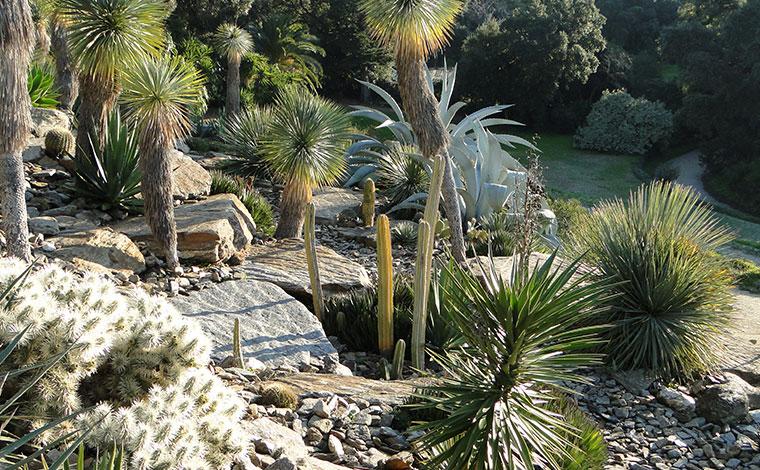 Jardin des Méditerranées : Le Jardin d'Amérique Aride