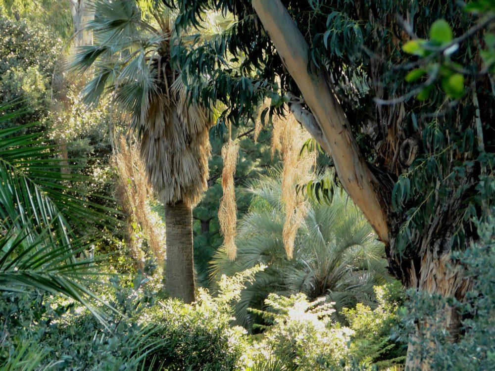 Le jardin domaine du rayol - Domaine du rayol le jardin des mediterranees ...