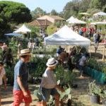 gondwana-2016-fete-des-plantes-domaine-du-rayol