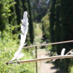 birdland-les-eoliens-domaine-du-rayol-naïs-coscia(71)