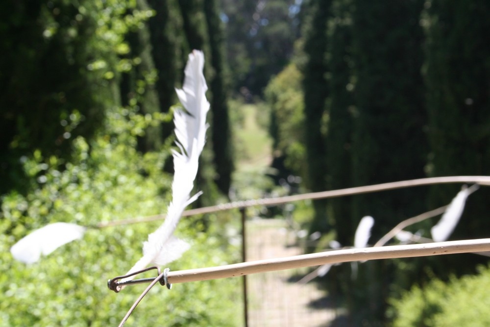 Birdland : installation Land Art sur France 3