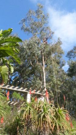 conseil de jardinier elagage domaine du rayol (2)