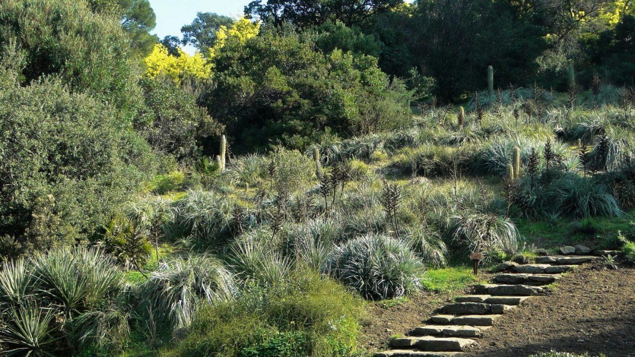 Le jardin en hiver domaine du rayol for Hiver au jardin