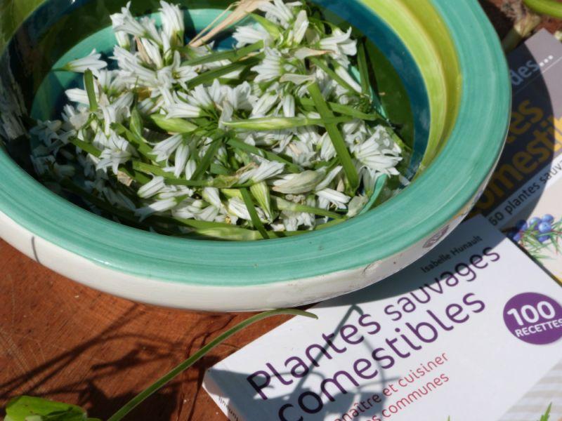 La cuisine des plantes sauvages domaine du rayol - Cuisine plantes sauvages comestibles ...