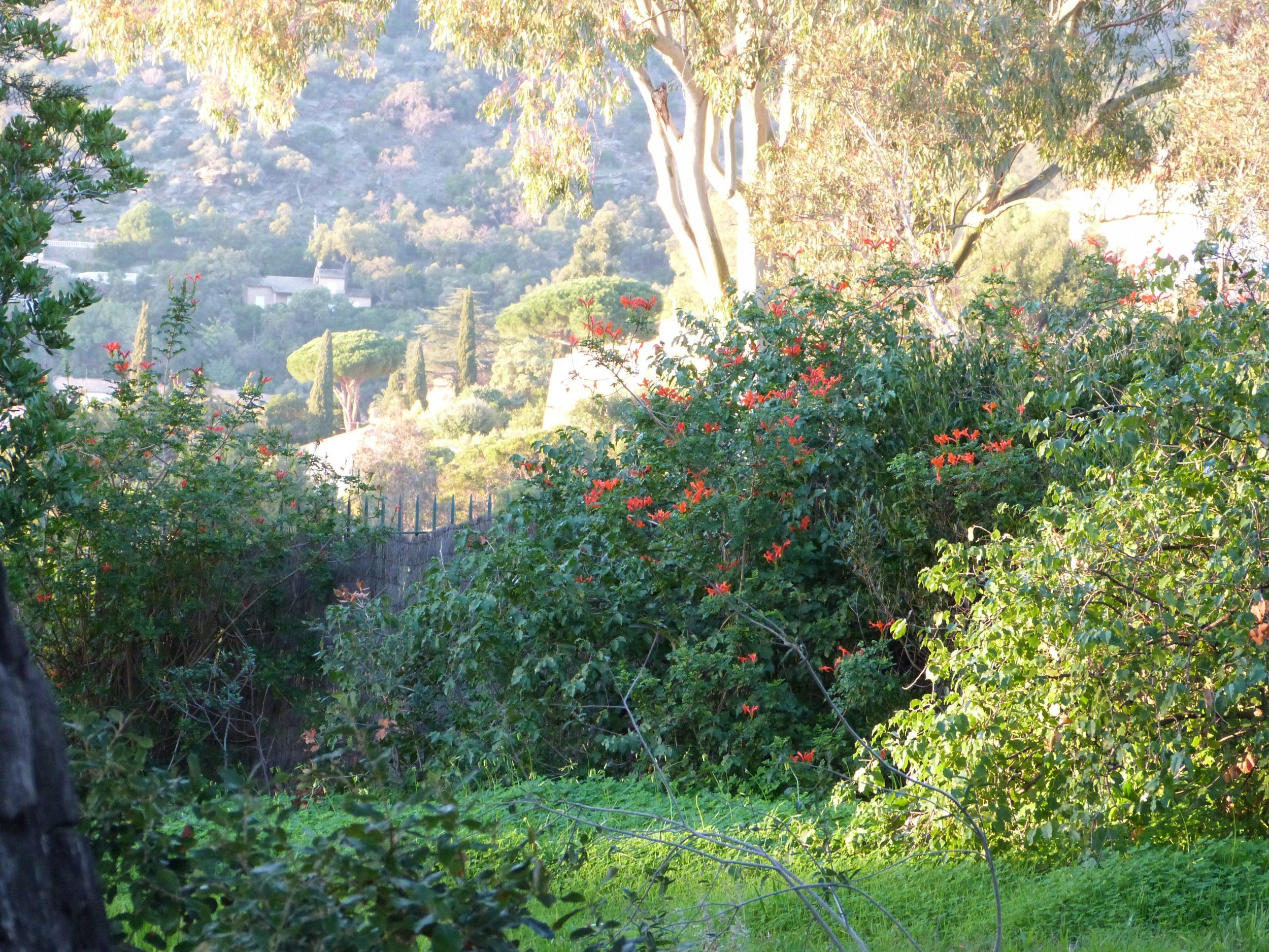 le conseil des jardiniers revigorer sa haie mixte