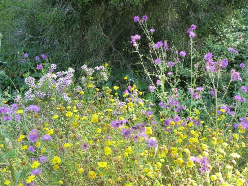 En ce moment au Jardin : la biodiversité se cache dans les herbes folles