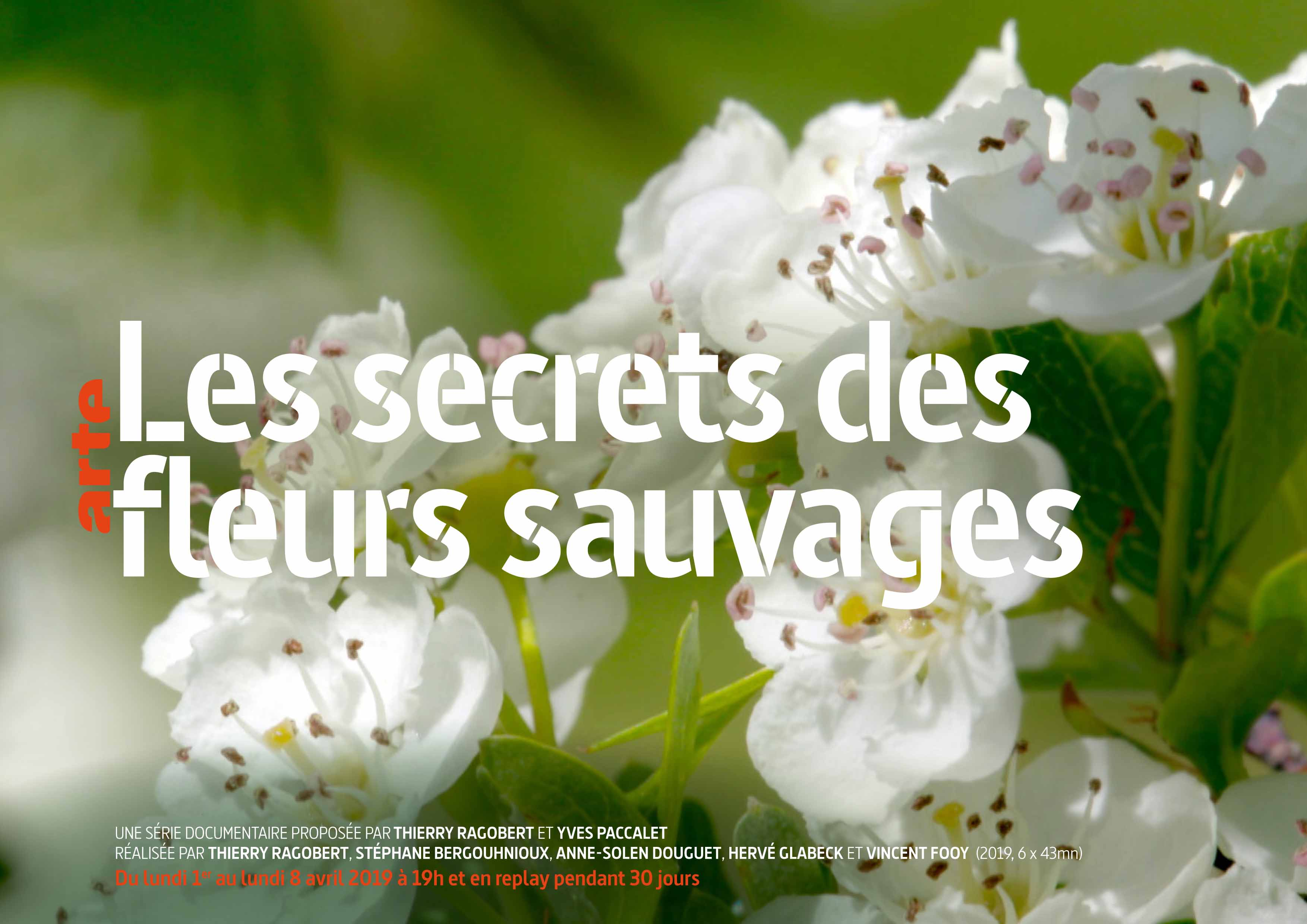 """""""Les secrets des fleurs sauvages"""" au Domaine du Rayol sur ARTE"""