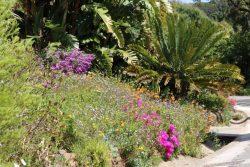 Jardin d'Afrique du Sud en fleur