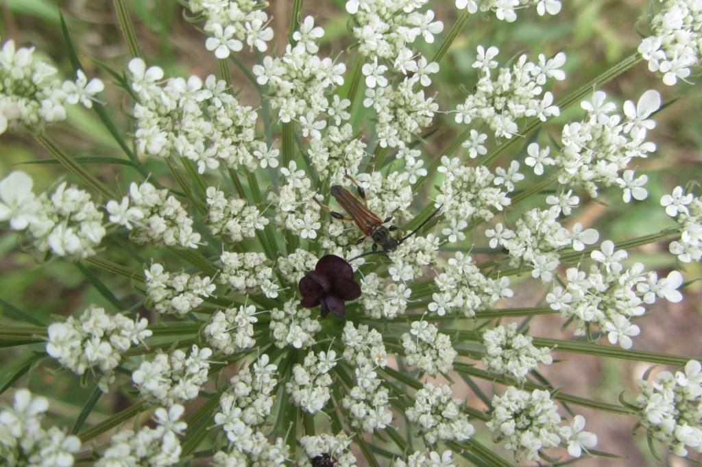 En ce moment au jardin : les oiseaux chantent et les abeilles bourdonnent