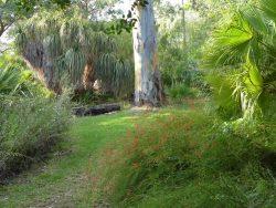 Le Jardin d'Amérique subtropicale