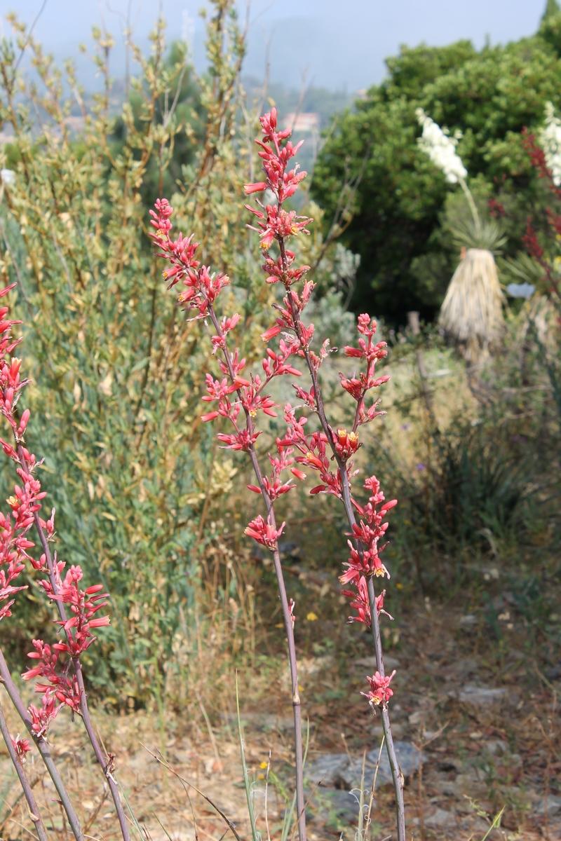 En ce moment au jardin : repos pour tout le monde, ou presque... - Domaine du Rayol