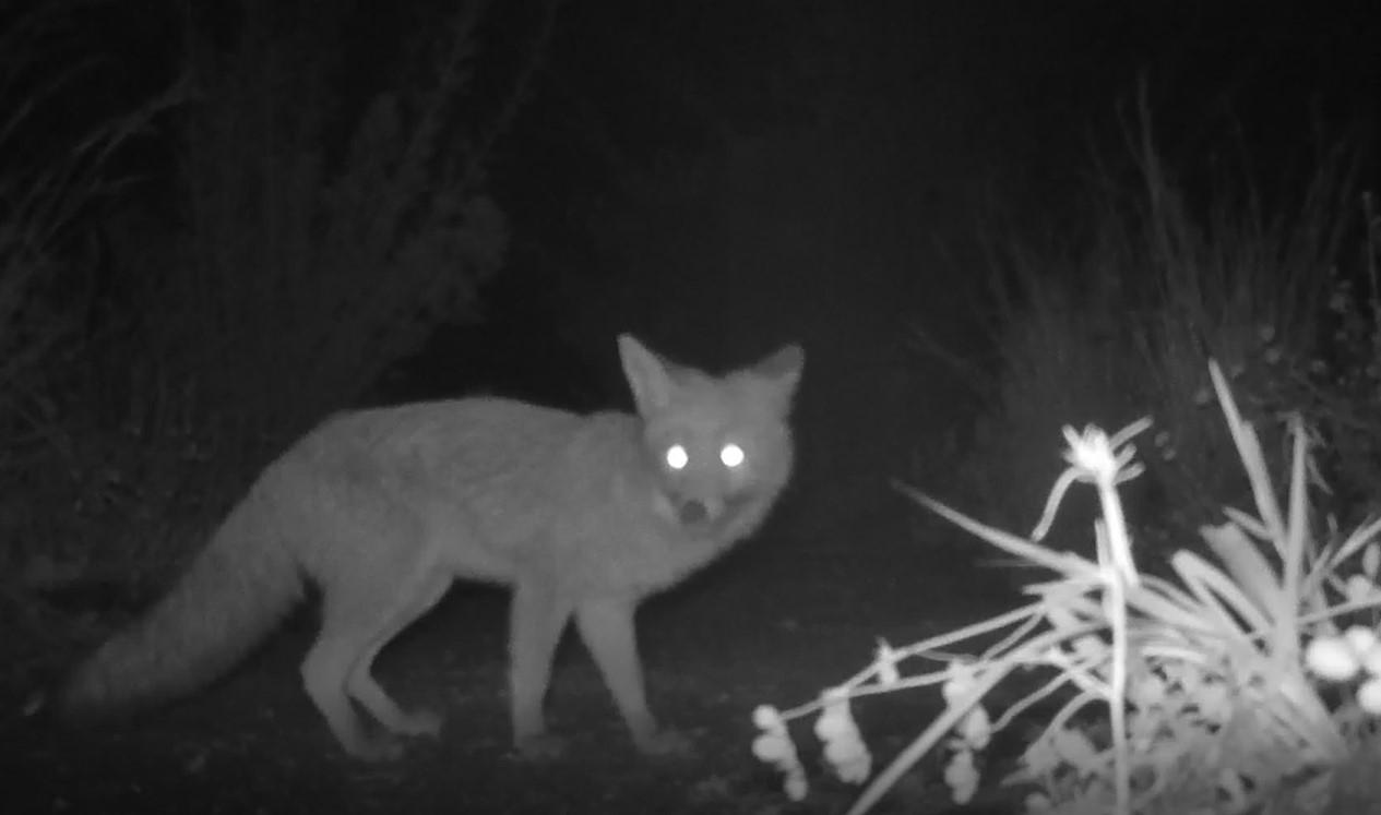En ce moment au jardin : coup de projecteur sur les visiteurs nocturnes