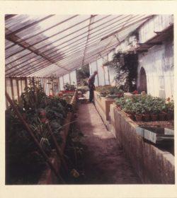 Intérieur de la serre, pour un jardin très fleuri, au goût des Potez, années 1960