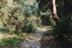 Parcelle d'Amérique subtropicale, vers 1989