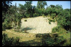 Première tentative de plantation de Carex, originaires de Nouvelle-Zélande, juillet 1996