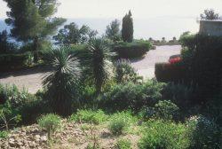 Le Jardin des Canaries, 1999