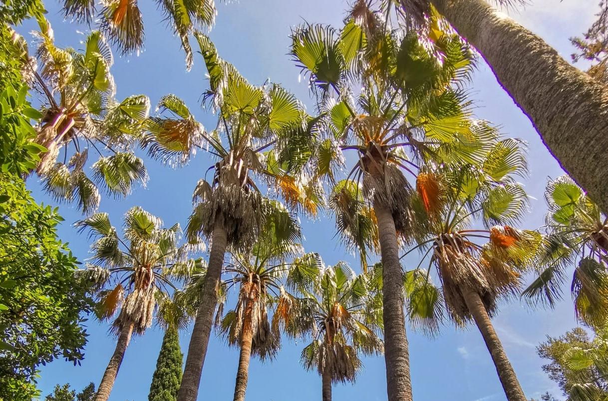 Focus : Les palmiers… Des arbres ?